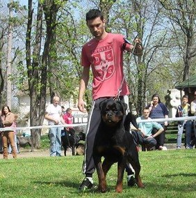 Balou Rottweiler male at RKNA show