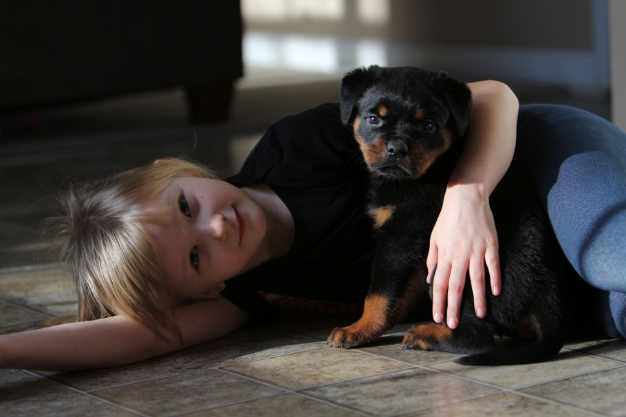 tennessee rottweiler puppies female