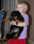 rottweiler puppy with Isabella