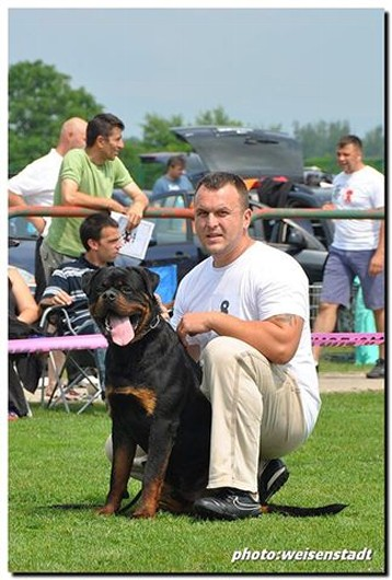 JERRY LEE VAN GORGAR ROTTWEILER MALE